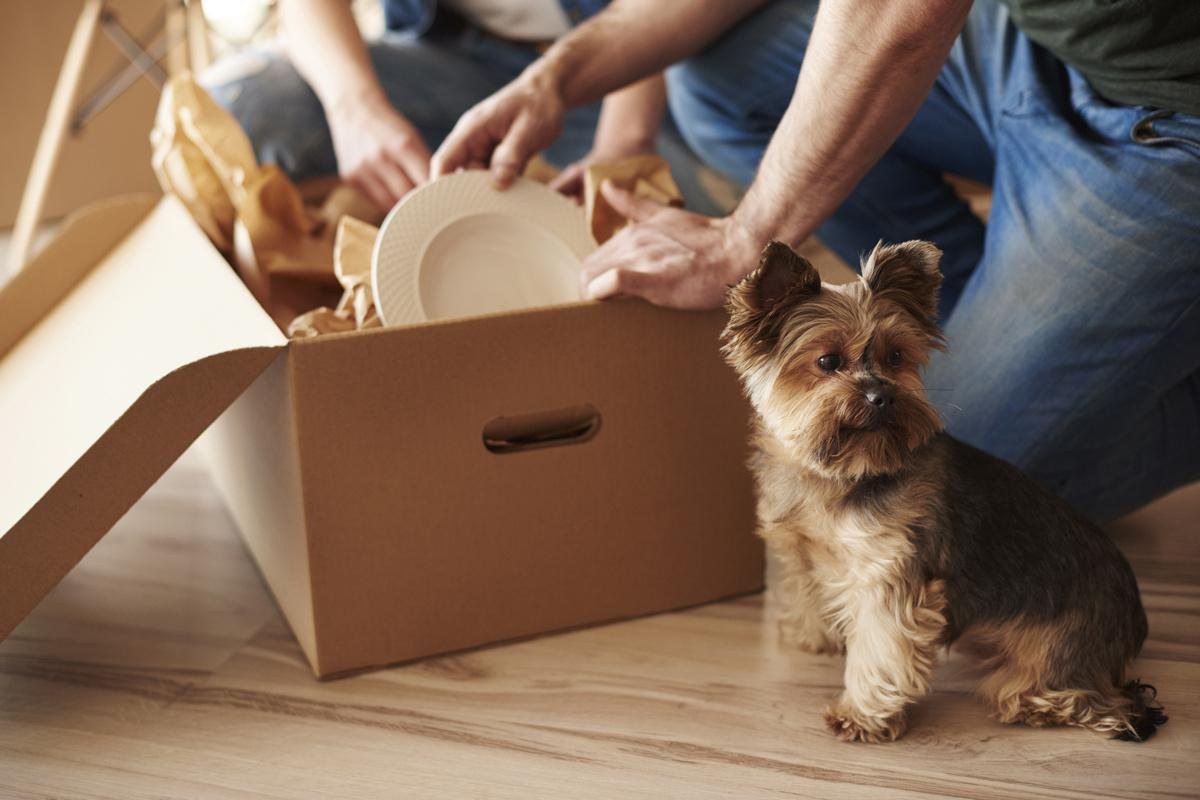Moving with pets? How to ease their anxiety on moving day